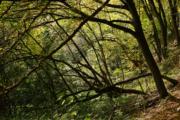 Sázava podzimní (2017)